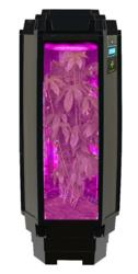 Los Angeles Indoor Hydroponics Leader Phototron Looks to Hearst for Organic Growth